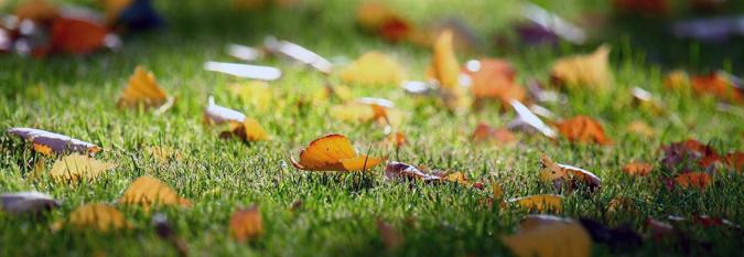 l automne est l conseils et astuces pour entretenir votre pelouse actualit s astuces et. Black Bedroom Furniture Sets. Home Design Ideas